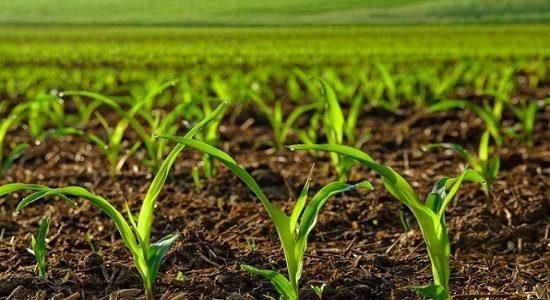 کشاورزی متمرکز