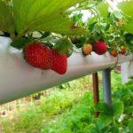 سود آورترین محصول کشاورزی