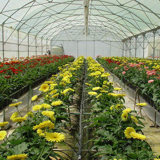 گلخانه در خانه   سودآور ترین محصول گلخانه ای